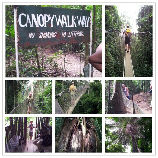 Kakum National Park and an impressive Canopywalk. Scary and high above the ground. We survived the walk and heading towards our next stop.