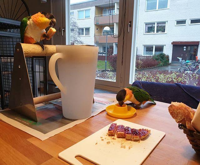 Frukost även för Jonsson.  Kurt på pinnen och Mannfred dricker råsaft.